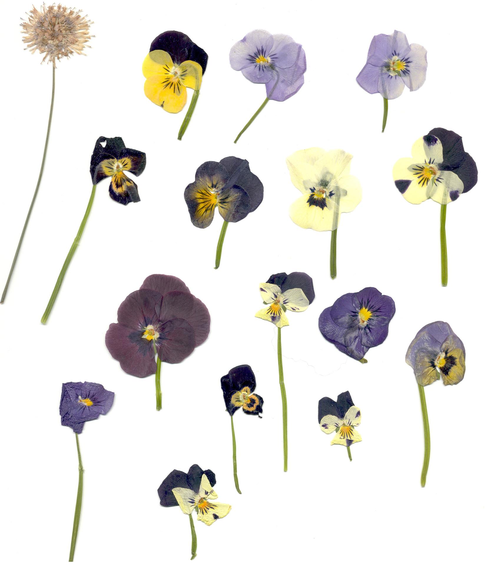 Pressed Flower Artistry – Warren Public Library